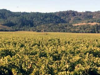 Best Areas to Stay in Wine Country | Napa Wine Country | Sonoma Wine Country